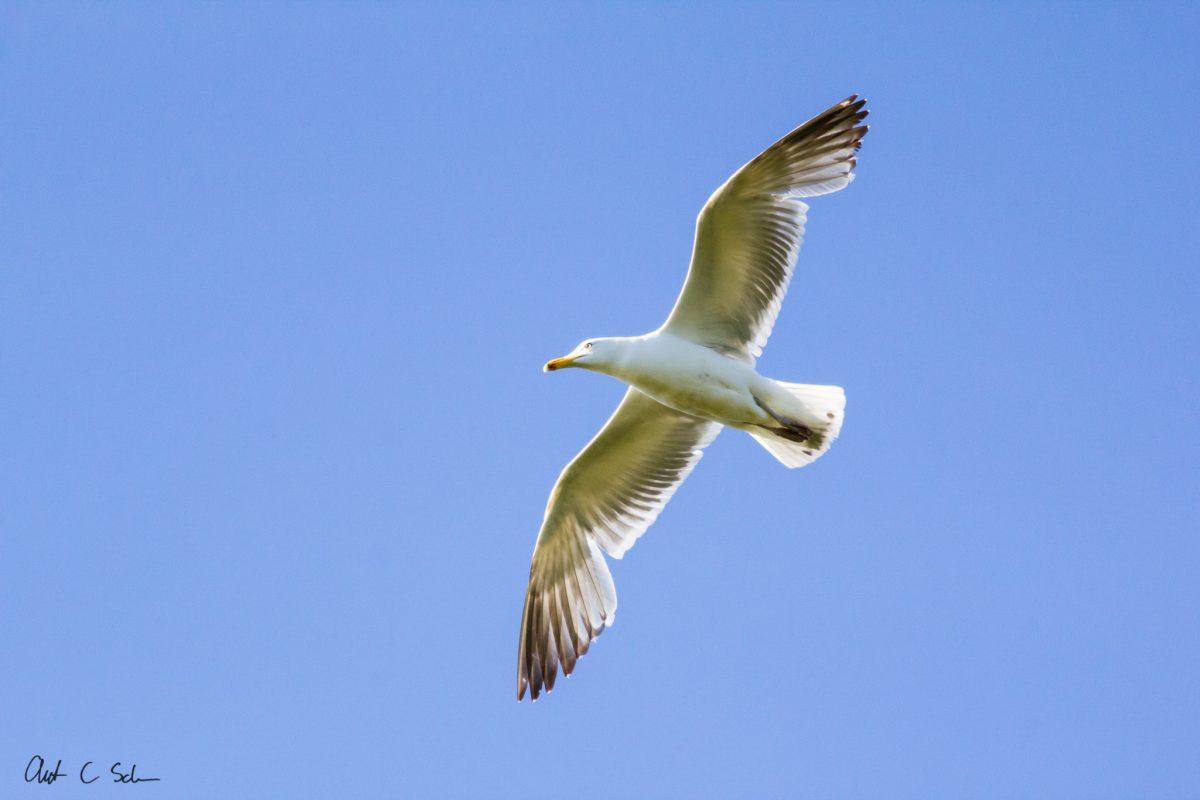 An Ode to Gulls