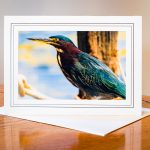 Green Heron Card photo